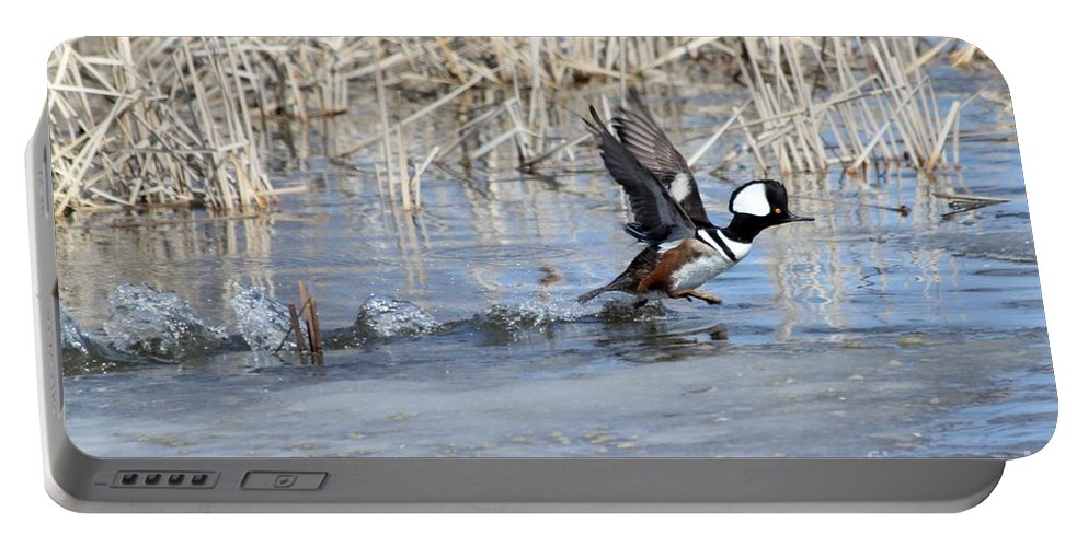 Hodded Portable Battery Charger featuring the photograph Hooded Merganser by Lori Tordsen