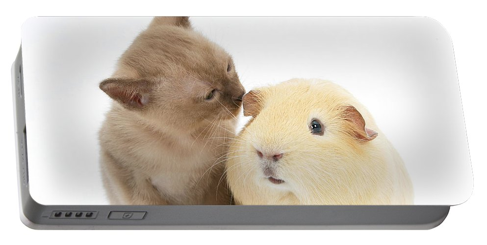 Animal Portable Battery Charger featuring the photograph Kitten And Guinea Pig by Mark Taylor