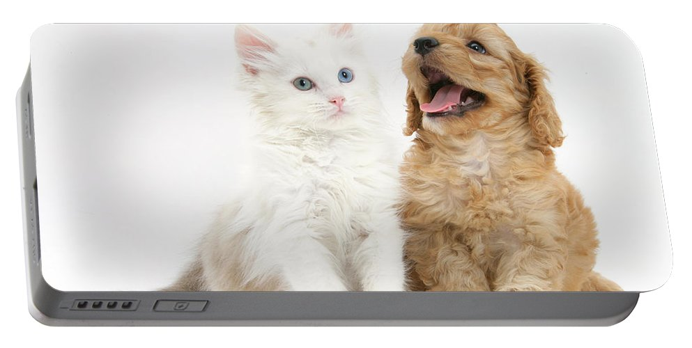 Animal Portable Battery Charger featuring the photograph Kitten And Puppy by Mark Taylor