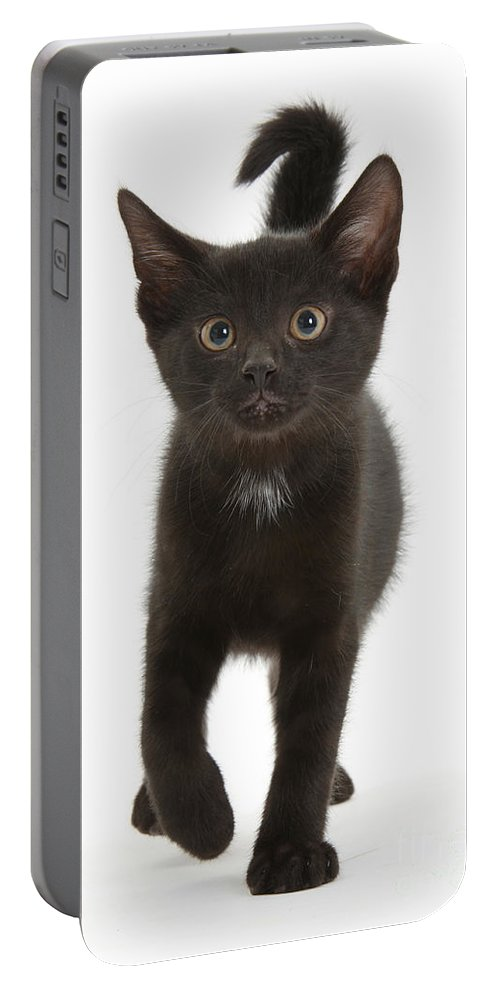 Nature Portable Battery Charger featuring the photograph Kitten by Mark Taylor