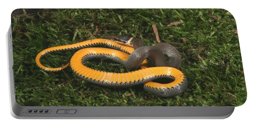 Animal Portable Battery Charger featuring the photograph Northern Ringneck Snake by Ted Kinsman