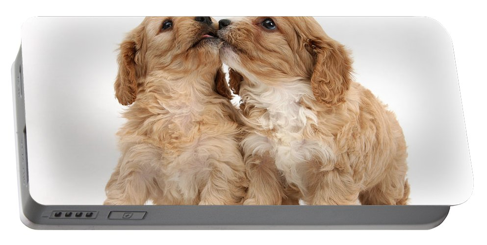 Animal Portable Battery Charger featuring the photograph Puppies by Mark Taylor