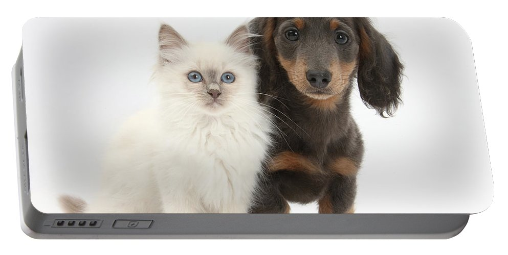 Dog Portable Battery Charger featuring the photograph Blue-point Kitten & Dachshund by Mark Taylor