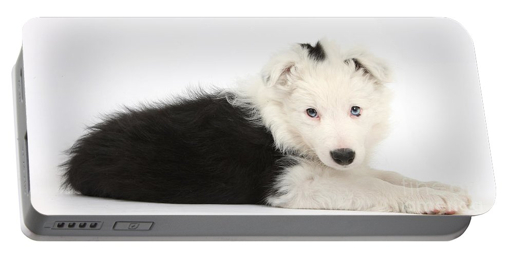 Nature Portable Battery Charger featuring the photograph Border Collie Puppy by Mark Taylor