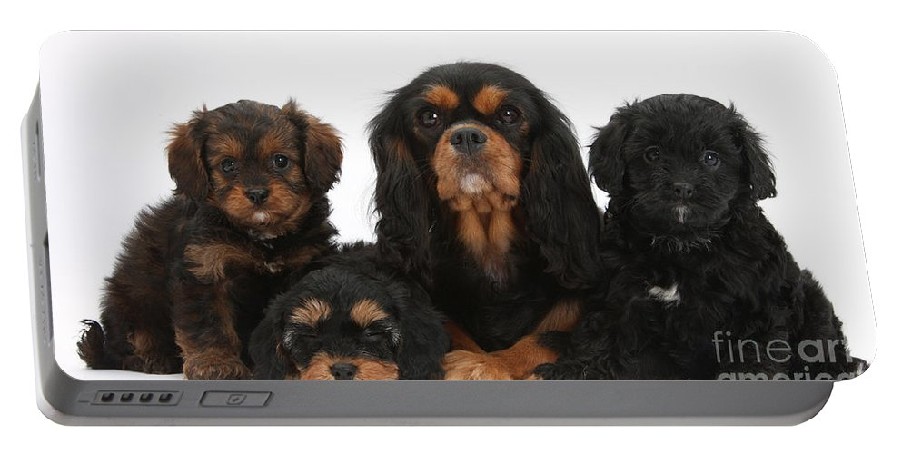 Animal Portable Battery Charger featuring the photograph Cavalier King Charles Spaniel by Mark Taylor