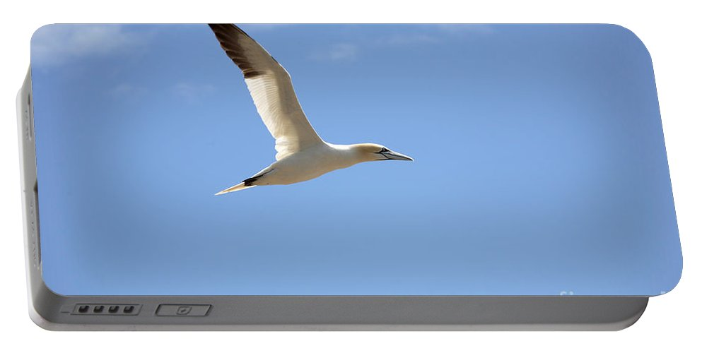 Northern Gannet Portable Battery Charger featuring the photograph Gannet In Flight by Ted Kinsman