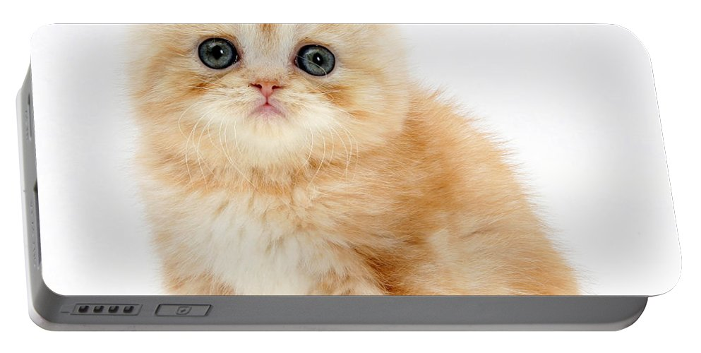 Animal Portable Battery Charger featuring the photograph Ginger Kitten by Mark Taylor
