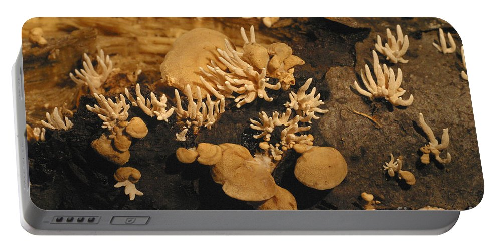Luminescent Portable Battery Charger featuring the photograph Luminescent Mushroom Panellus Stipticus by Ted Kinsman