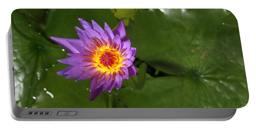 Flora Portable Battery Charger featuring the photograph Waterlily Opening Part Of A Series by Ted Kinsman