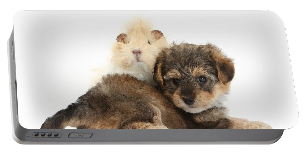 Nature Portable Battery Charger featuring the photograph Yorkipoo Pup With Guinea Pig by Mark Taylor