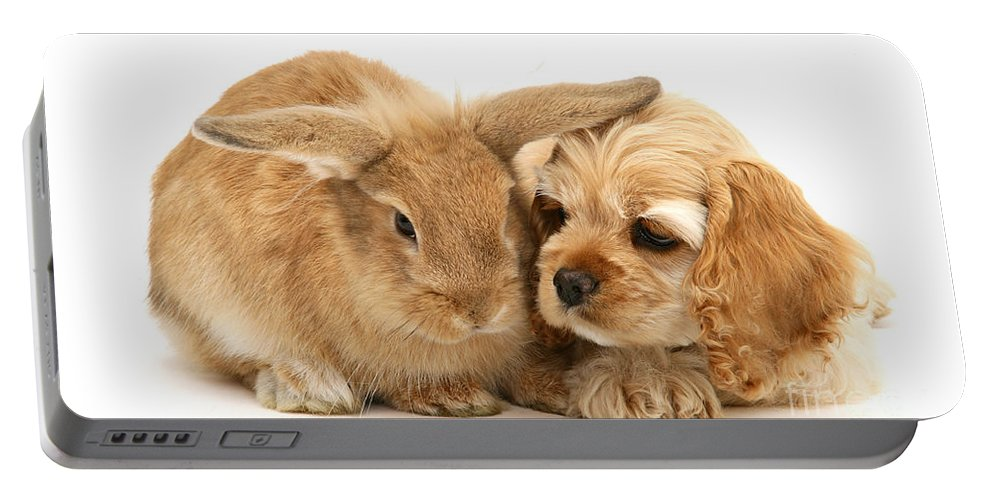 Nature Portable Battery Charger featuring the photograph Cocker Spaniel And Rabbit by Mark Taylor