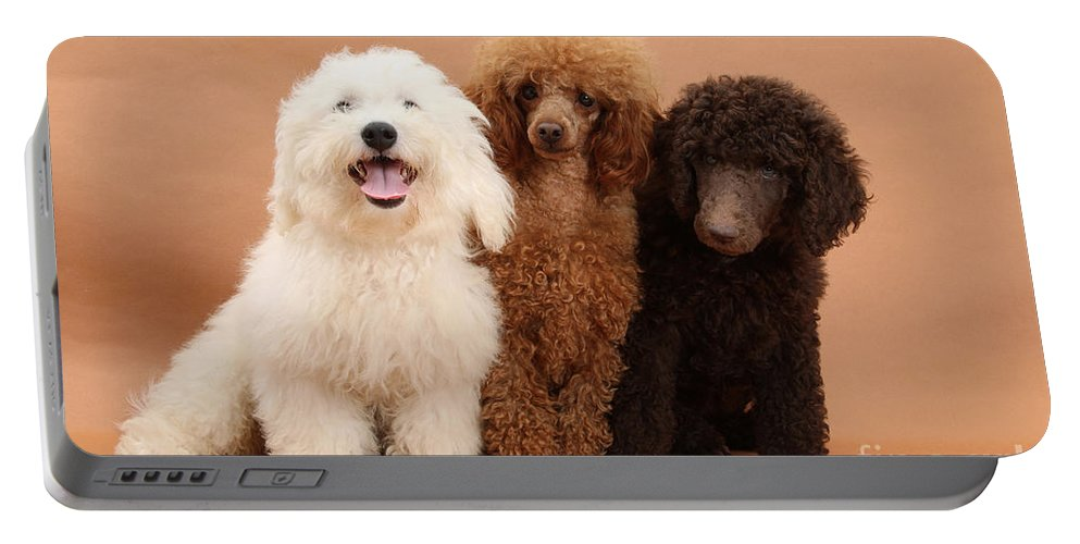 Animal Portable Battery Charger featuring the photograph Dogs by Mark Taylor