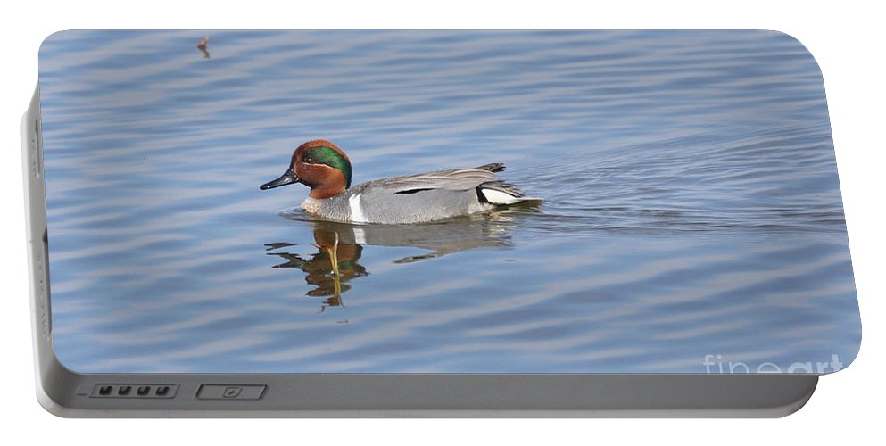Teal Portable Battery Charger featuring the photograph Green Wing Teal by Lori Tordsen