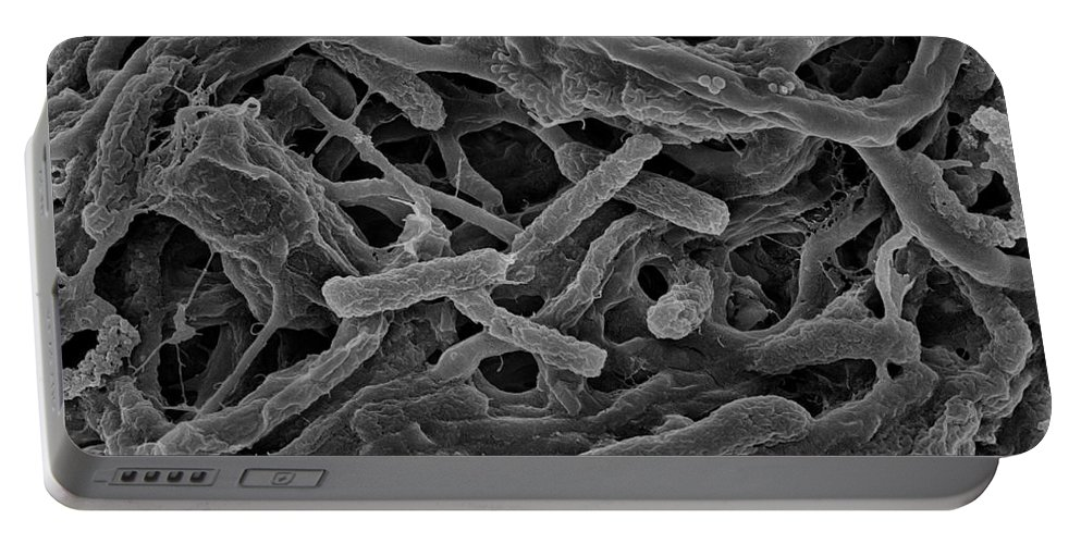 Bacteria Portable Battery Charger featuring the photograph Thermophile Bacteria by Ted Kinsman