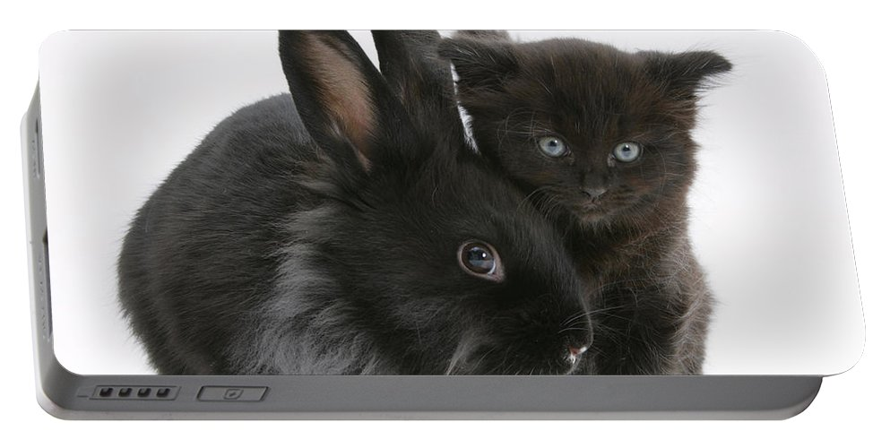 Animal Portable Battery Charger featuring the photograph Kitten And Rabbit by Mark Taylor