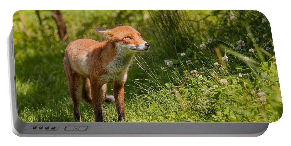 British Wildlife Centre Portable Battery Charger featuring the photograph A British Red Fox by Dawn OConnor