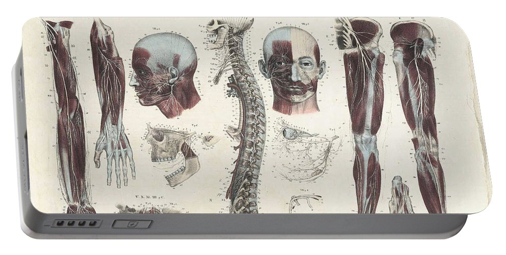 Anatomie Methodique Portable Battery Charger featuring the photograph Anatomie Methodique Illustrations by Science Source