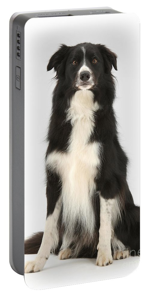 Dog Portable Battery Charger featuring the photograph Border Collie by Mark Taylor