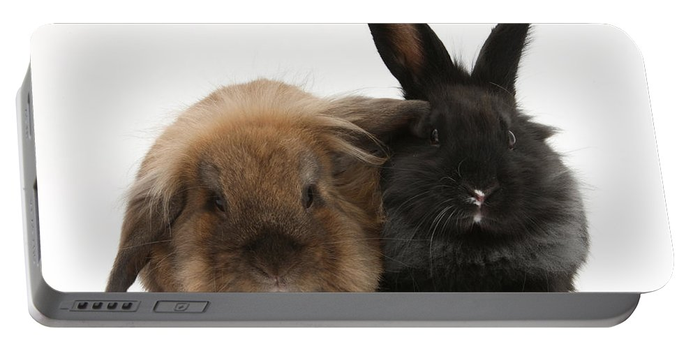 Animal Portable Battery Charger featuring the photograph Rabbits by Mark Taylor