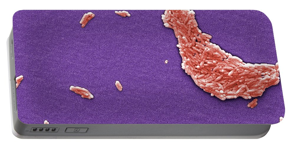 Science Portable Battery Charger featuring the photograph Salmonella, Sem by Science Source