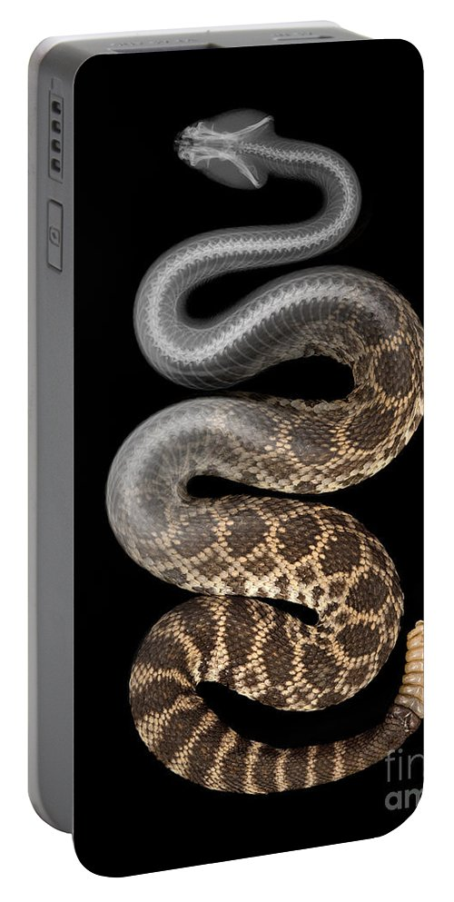 Crotalus Oreganus Helleri Portable Battery Charger featuring the photograph Southern Pacific Rattlesnake X-ray by Ted Kinsman