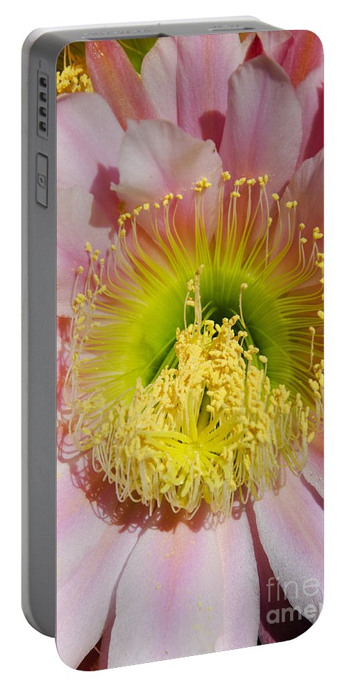Pink Portable Battery Charger featuring the photograph Pink Cactus Flower by Jim And Emily Bush