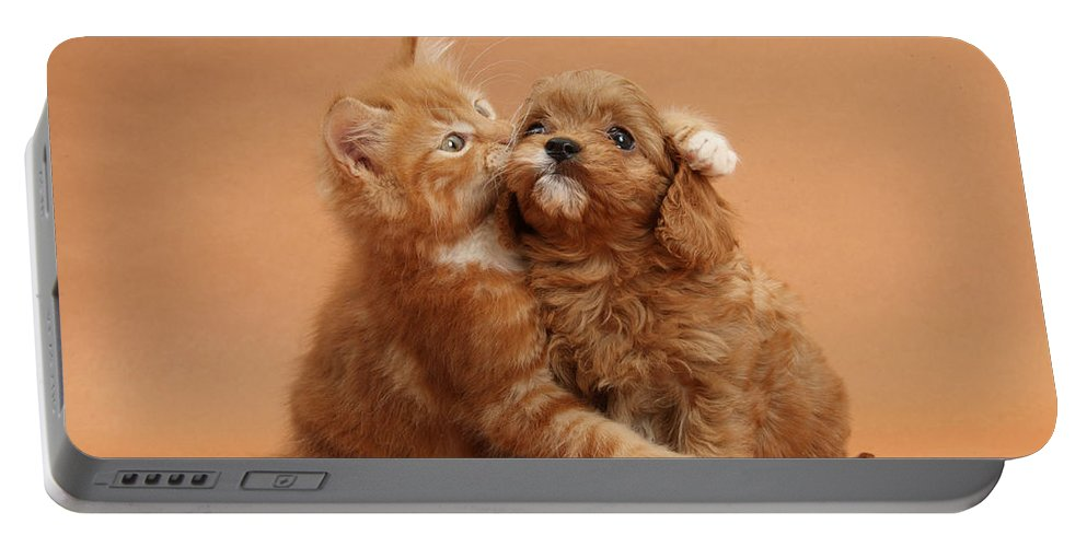 Animal Portable Battery Charger featuring the photograph Puppy And Kitten by Mark Taylor