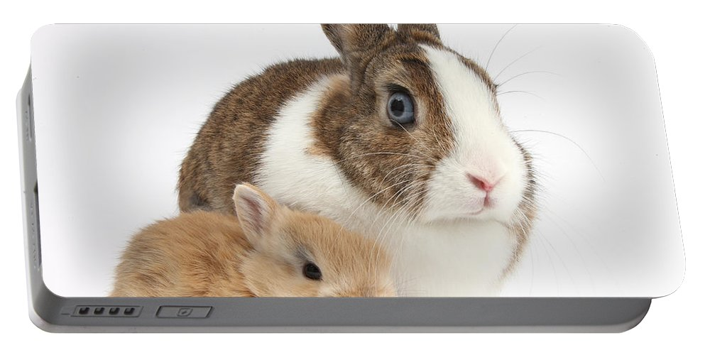 Nature Portable Battery Charger featuring the photograph Rabbit And Baby Bunny by Mark Taylor