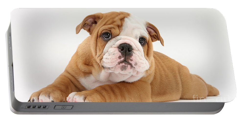 Dog Portable Battery Charger featuring the photograph Bulldog Pup by Mark Taylor