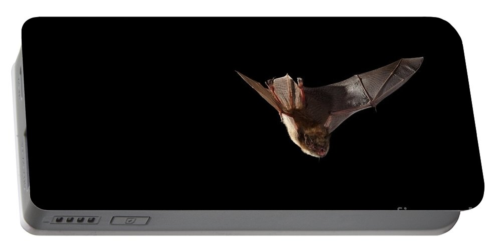 Fauna Portable Battery Charger featuring the photograph Little Brown Bat by Ted Kinsman