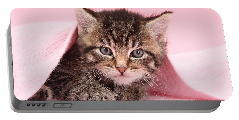Nature Portable Battery Charger featuring the photograph Tabby Kitten by Mark Taylor