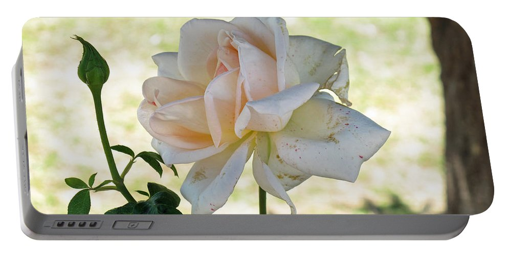 Flower Portable Battery Charger featuring the photograph A Beautiful White And Light Pink Rose Along With A Bud by Ashish Agarwal