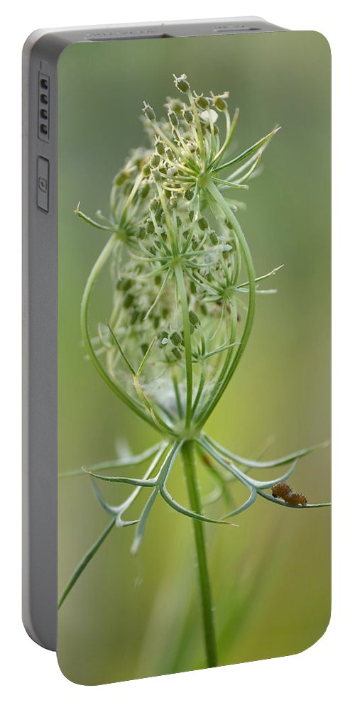 Caterpillar Portable Battery Charger featuring the photograph A Meal Of Lace by JD Grimes