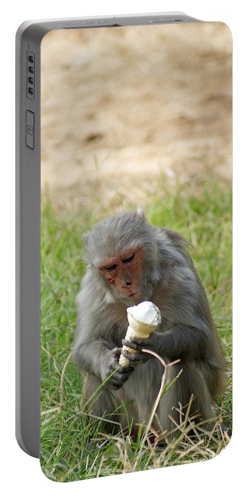 Monkey Portable Battery Charger featuring the photograph A Monkey Enjoying An Ice Cream Cone Inside Delhi Zoo by Ashish Agarwal