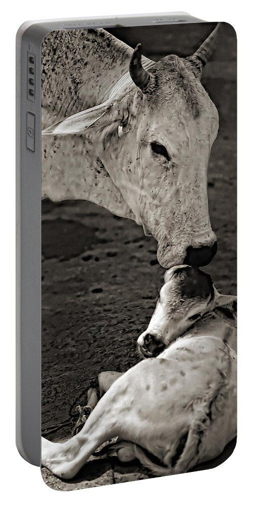 Cow Portable Battery Charger featuring the photograph A Mother's Love Monochrome by Steve Harrington