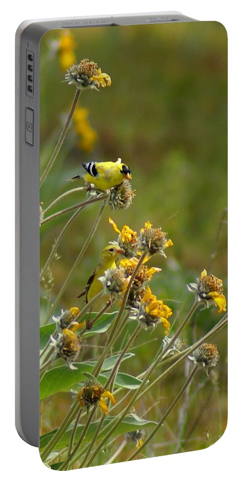 Goldfinches Portable Battery Charger featuring the photograph A Pair Of Goldfinches In Spokane by Ben Upham III
