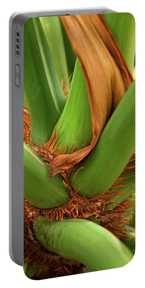 Palm Portable Battery Charger featuring the photograph A Palmetto's Elbows by JD Grimes