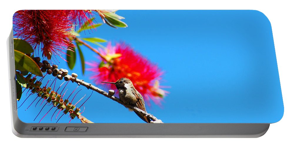 Hummers Portable Battery Charger featuring the photograph A Place To Perch by Lynn Bauer