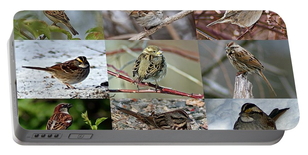 Sparrow Portable Battery Charger featuring the photograph A Study In Sparrows by Joe Faherty