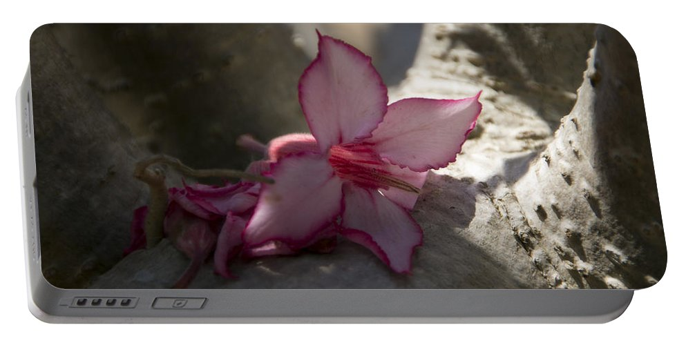 Flower Portable Battery Charger featuring the photograph A Touch Of Pink V2 by Douglas Barnard