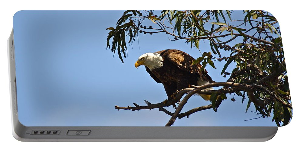 Birds Portable Battery Charger featuring the photograph About To Fly by Diana Hatcher