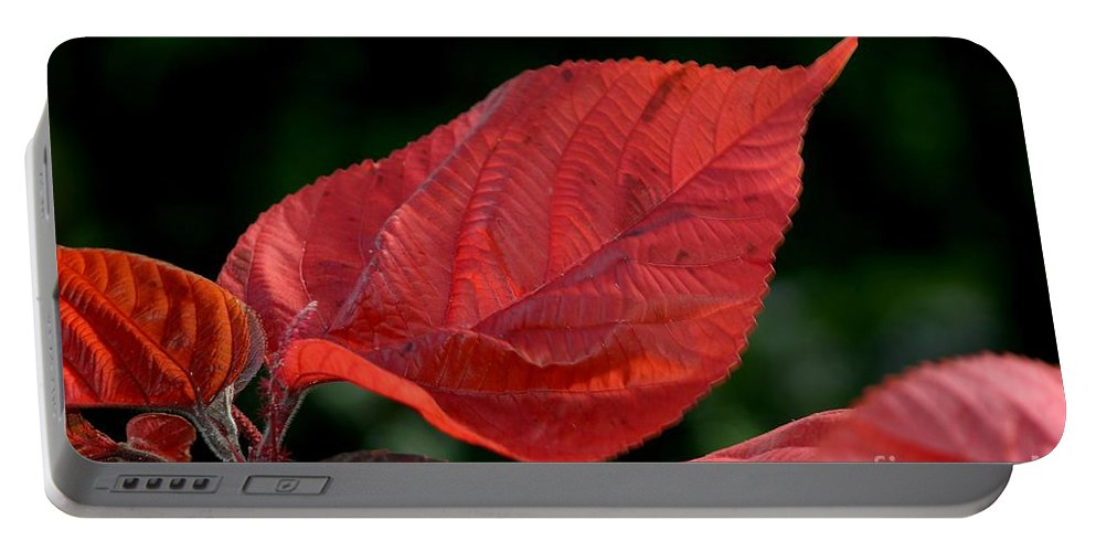 Plant Portable Battery Charger featuring the photograph Acalypha by Living Color Photography Lorraine Lynch