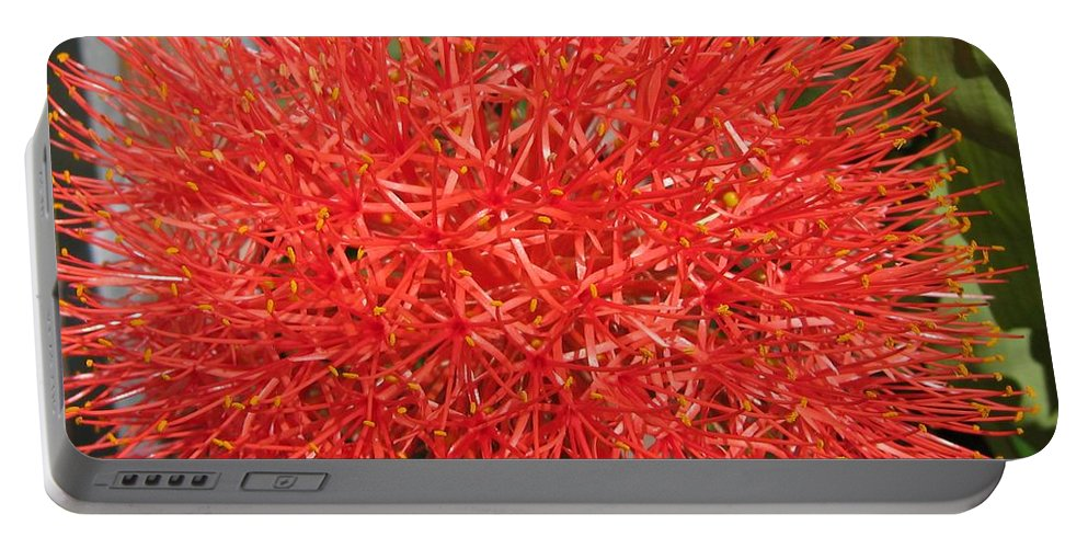 African Blood Lily Portable Battery Charger featuring the photograph African Blood Lily Or Fireball Lily by J McCombie