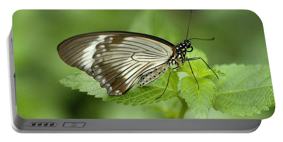 Papilio Dardanus Portable Battery Charger featuring the photograph African Papilio Dardanus Butterfly by Kathy Clark