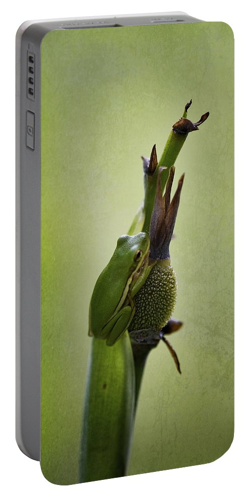 Hyla Cinerea Portable Battery Charger featuring the photograph Alabama Green Tree Frog - Hyla Cinerea by Kathy Clark