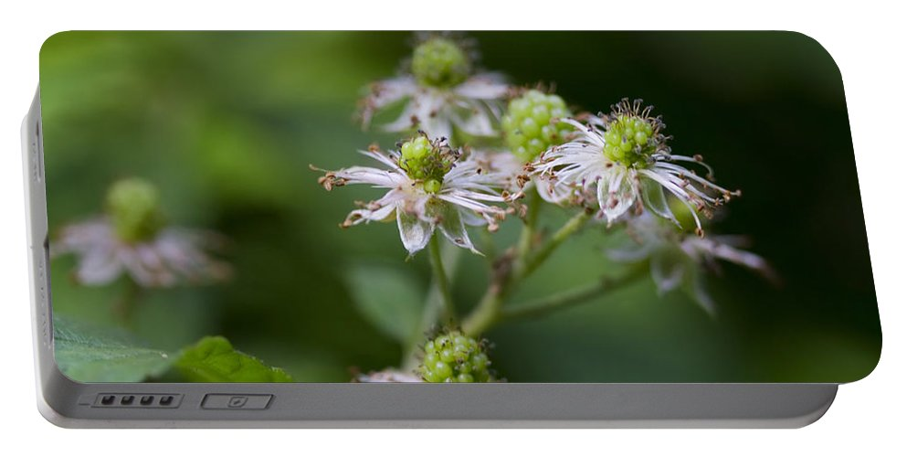 Blackberry Portable Battery Charger featuring the photograph Alabama Wild Blackberries In The Making by Kathy Clark