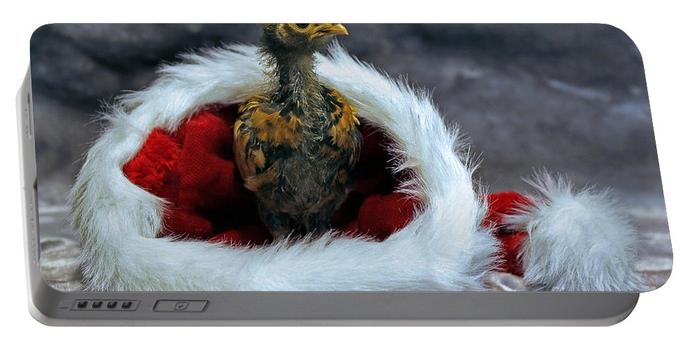 Chicken Portable Battery Charger featuring the photograph All I Want For Christmas by Rebecca Morgan
