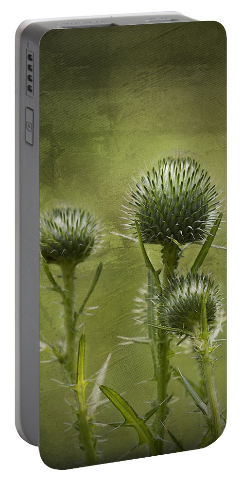 Bull Thistle Portable Battery Charger featuring the photograph All Prickles And Stings by Kathy Clark
