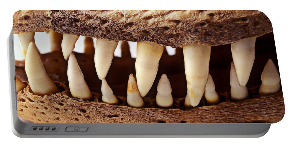 Alligator Skull Teeth Portable Battery Charger featuring the photograph Alligator Skull Teeth by Garry Gay
