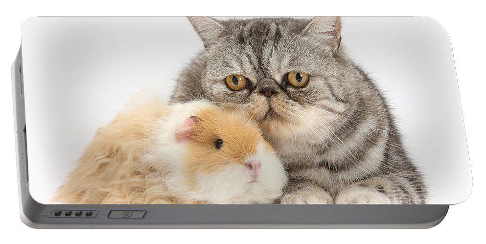 Nature Portable Battery Charger featuring the photograph Alpaca Guinea Pig And Silver Tabby Cat by Mark Taylor